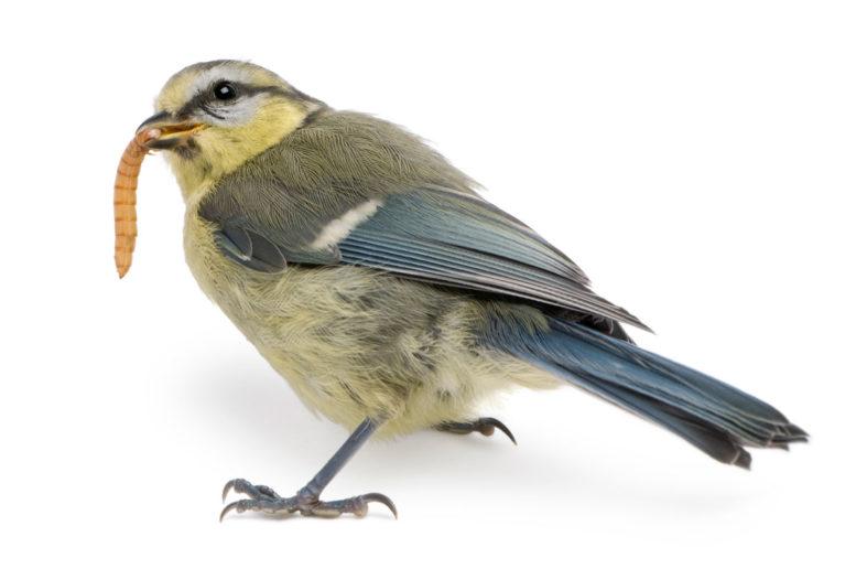 Vogel fängt Wurm